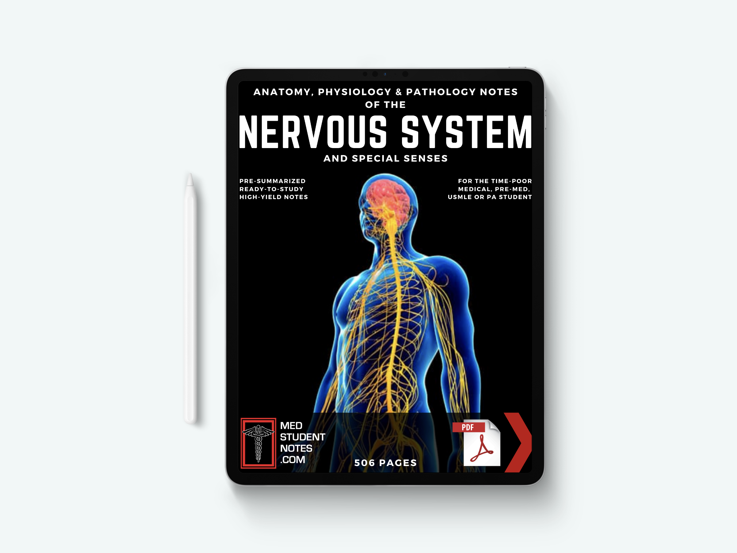 the nervous system special senses notes